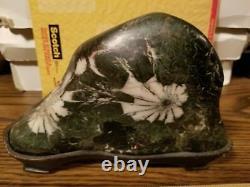 Rare! Japanese Chrysanthemum rock kikka seki